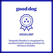 Good Dog Exellent Badge Miniature Poodle