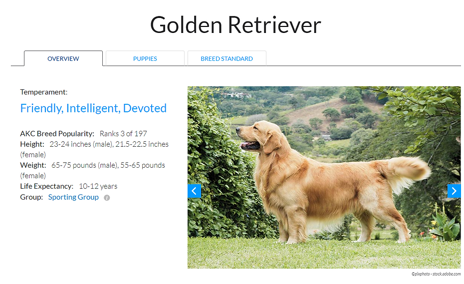 Golden Retriever AKC Overview pic1.png
