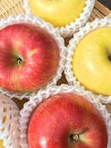 信州産りんご