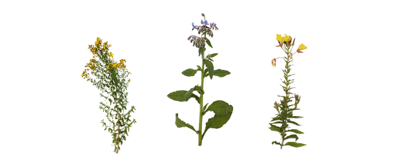 Blumen_1.png