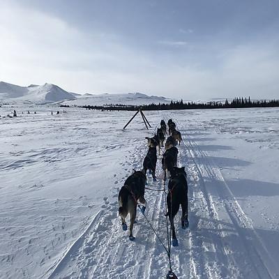 2018 Iditarod Race No.4