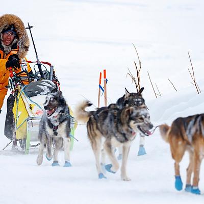 2018 Iditarod Race No.5