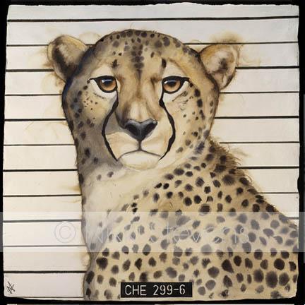 Wanted Cheetah