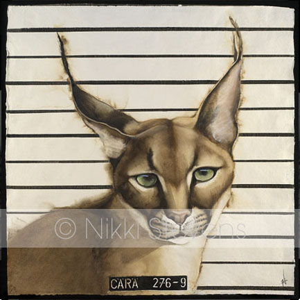 Wanted Lynx