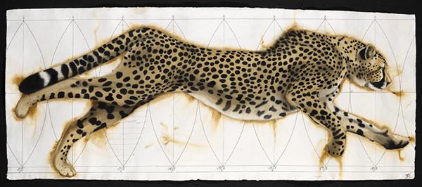 Vortex Cheetah