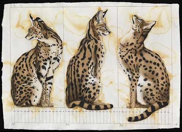Several Serval