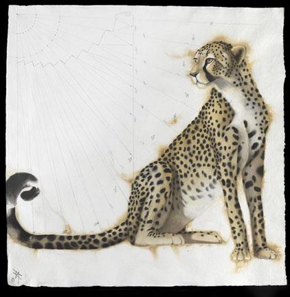 Pythagoras Cheetah