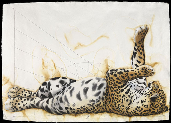 Jaguar Languid