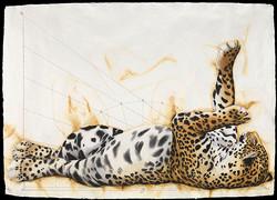 Jaguar Languid