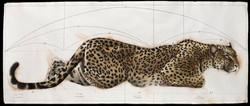 Golden Section Leopard