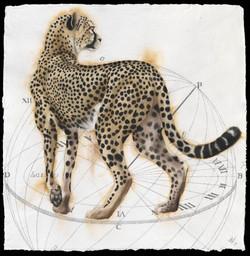 Elliptical Cheetah