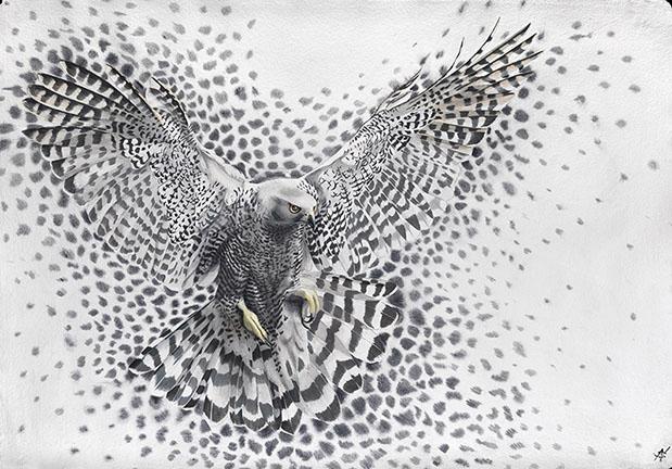 Molecule Hawk