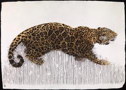 Jaguar Pushing Up Daisies