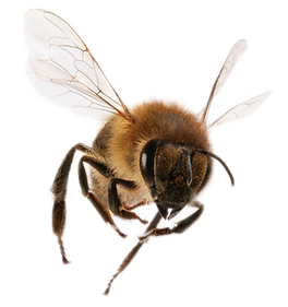 bee_PNG13.png