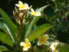 DSCN0268-2.jpg