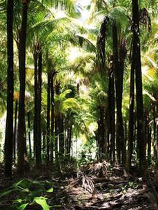 Punta del Viento Reserve