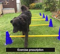 exercise script_edited.jpg