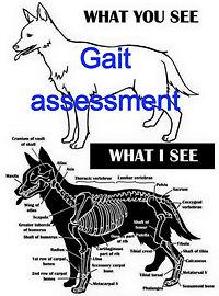 gait assessment_edited.jpg