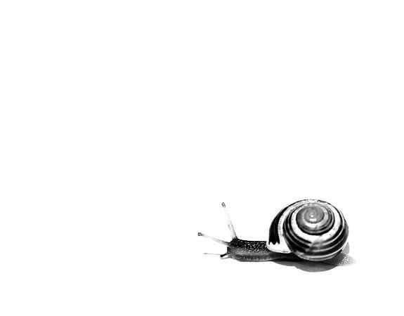 snegl-.jpg