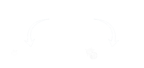 Blood is composed of Plasma and Cells