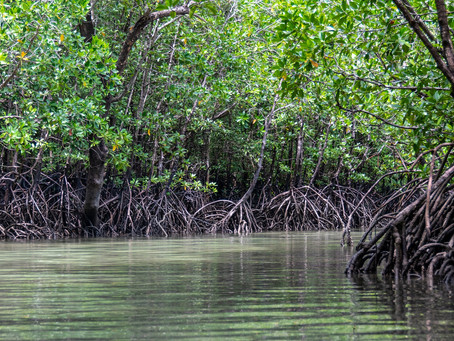 The Importance of Blue Carbon
