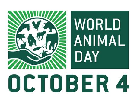 World Animal Day 2020