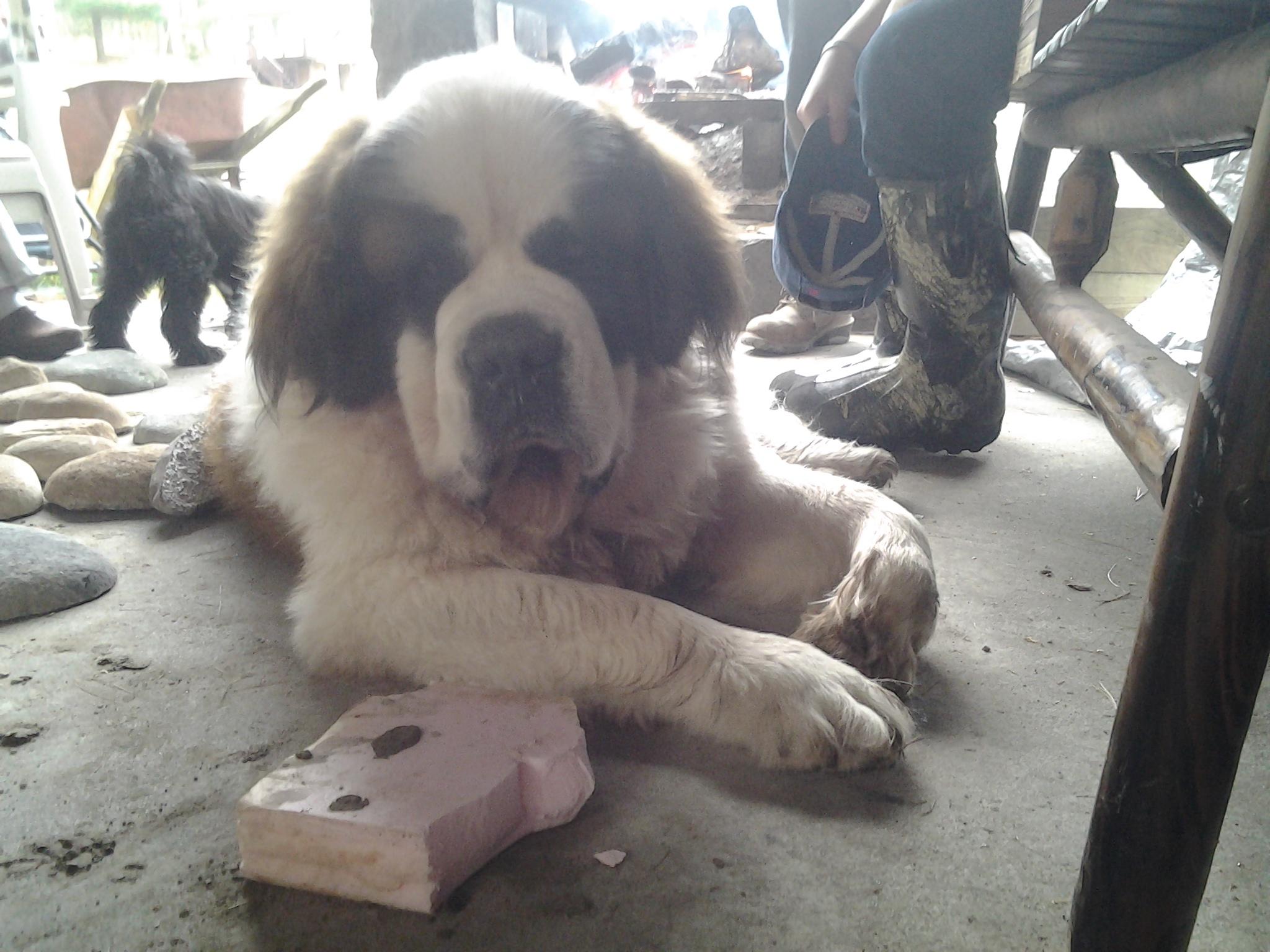 Family Pup hard at work