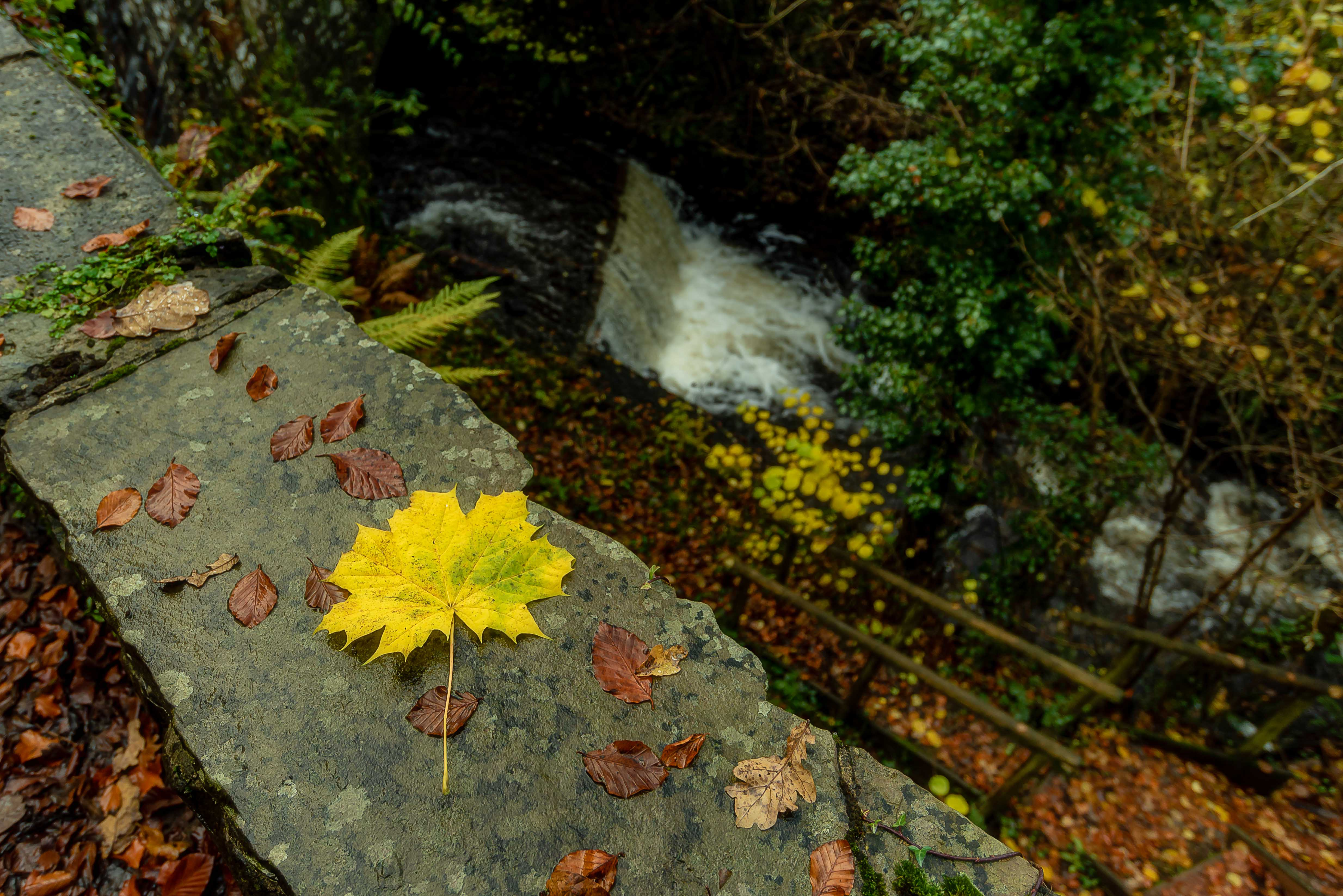 The Yellow leaf, Wales