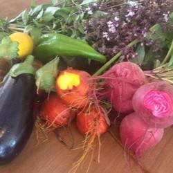 Légumes_Guillaume