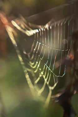 regenboogweb