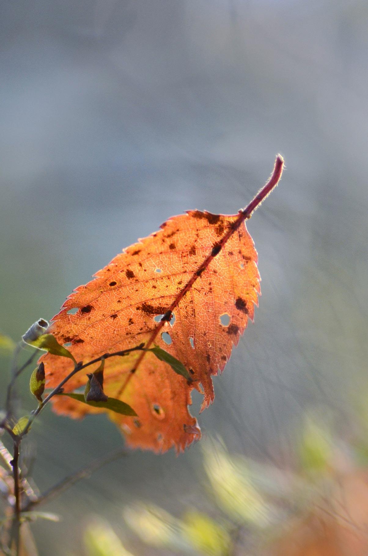vallend blad
