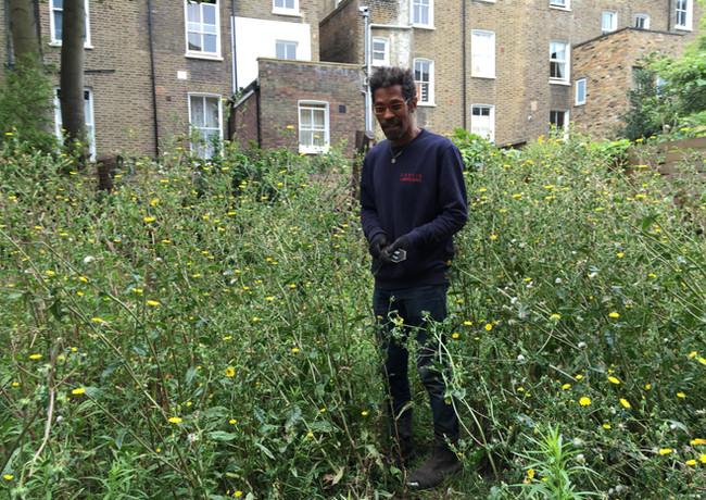 Weeds as tall as Derek!