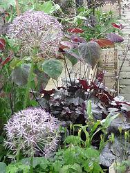 Plant association colours textures