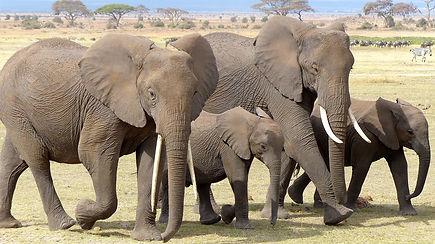 elephants- 2 mom 2 babies.jpg