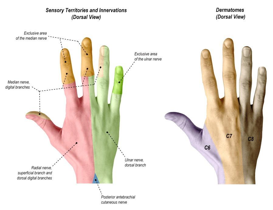 Zenuwen hand