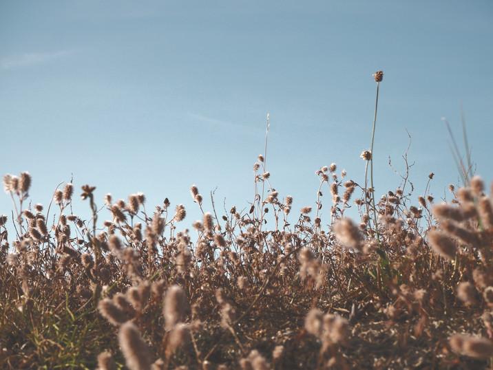 Soft Candyfloss