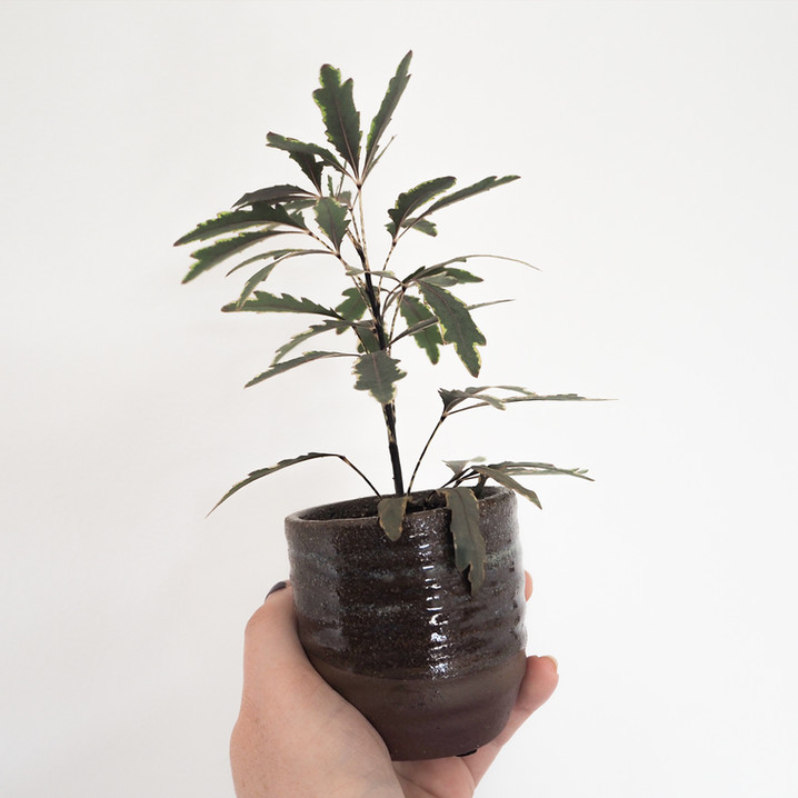 plantjew.jpg