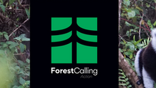 Forest Calling