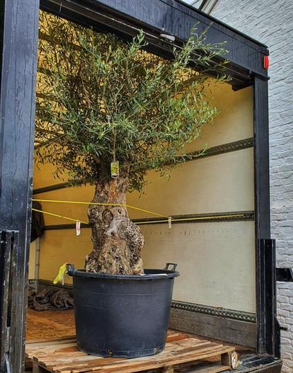 Ed Kowalski with a tree