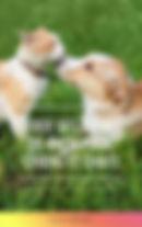 Guide des fleurs de bach pour chiens et