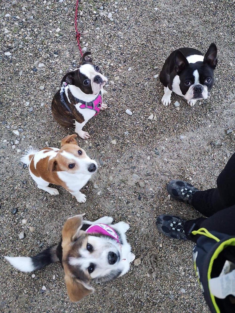copains chiens