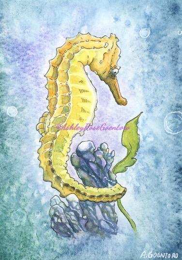 Seahorse%20Instagram_edited