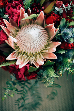 King Protea Berry Natives