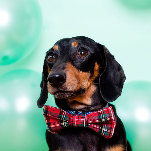 Red Tartan Dog Party Bow Tie