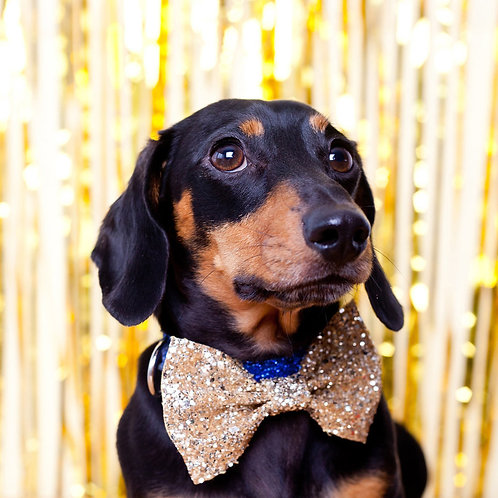 Gold Glitter Dog Party Bow Tie