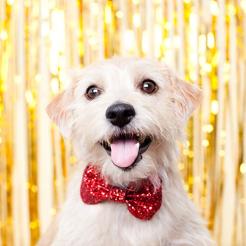 Red Glitter Dog Party Bow Tie