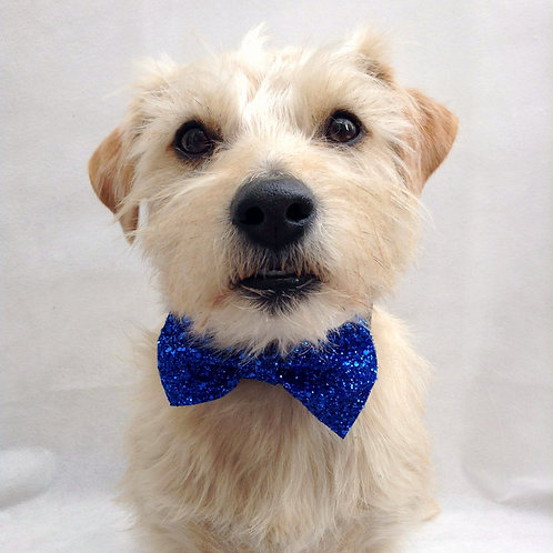 Blue Glitter Dog Party Bow Tie