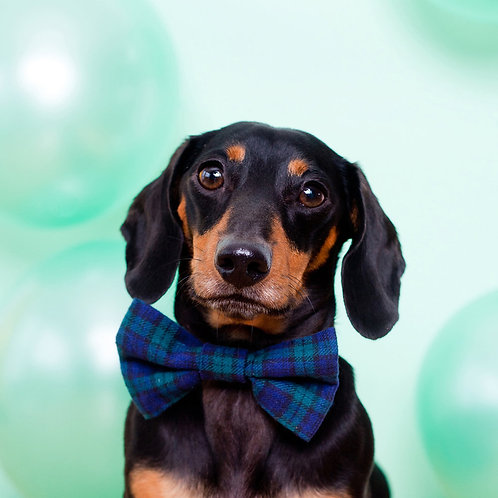 Green Tartan Dog Party Bow Tie