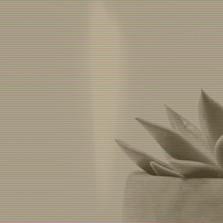 living plant zen