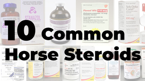 10 Common Steroids in Equine Practice